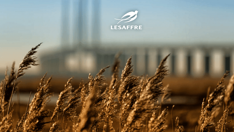 Industrie Fermentation Lesaffre Consulting Performance